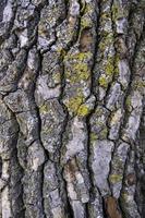 corteza de árbol con textura foto