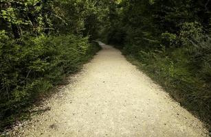camino profundo en el bosque foto