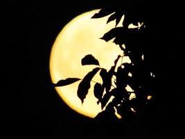 ramas de los árboles sobre fondo de luna llena. la atmósfera mística del bosque nocturno. foto