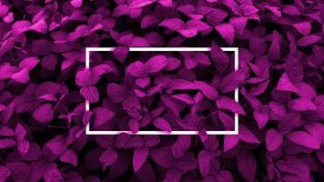 diseño creativo hecho con fondo de hojas de violeta, marco cuadrado. Este es un espacio en blanco para tarjetas publicitarias. concepto de naturaleza. foto