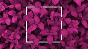 diseño creativo hecho con fondo de hojas de violeta, marco cuadrado. Este es un espacio en blanco para tarjetas publicitarias. concepto de naturaleza. cartel de otoño. foto