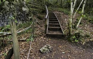 camino con madera en el bosque foto