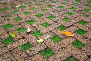 decorar el suelo del césped con ladrillo. foto