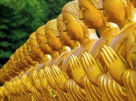 filas de estatuas de buda en el templo, tailandia. foto
