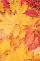 Autumn leaves fallen from maple and mountain ash. Autumn natural background vertical  format photo