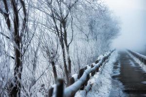 pasarela a las heladas invernales foto