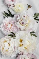 Pink and white peonies. photo