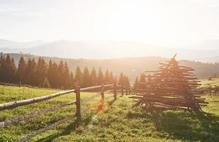 Beautiful summer mountain landscape at sunshine.View of the meadow fenced fence and cows grazing on it photo