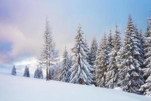 gran foto de invierno en las montañas de los Cárpatos con abetos cubiertos de nieve. colorida escena al aire libre, concepto de celebración de feliz año nuevo. foto post-procesada de estilo artístico