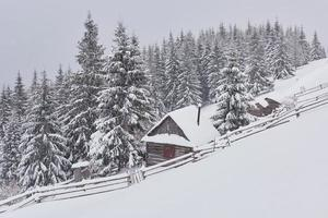 Cozy wooden hut high in the snowy mountains. Great pine trees on the background. Abandoned kolyba shepherd. Cloudy day. Carpathian mountains, Ukraine, Europe photo