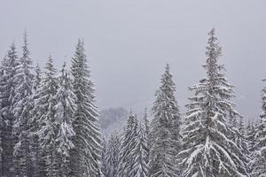 paisaje de invierno de hadas con abetos y nevadas. concepto de saludos de navidad foto