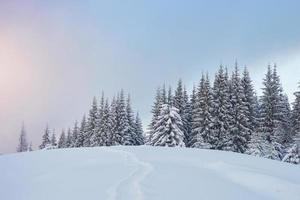 Majestic white spruces glowing by sunlight. Picturesque and gorgeous wintry scene. Location place Carpathian national park, Ukraine, Europe. Alps ski resort photo