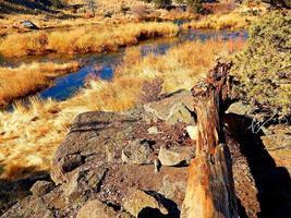 Golden Grass Deschutes River Cline Falls State Park near Redmond OR photo