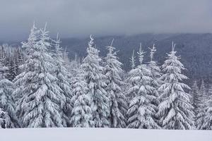 imagen escénica del árbol de abetos. día helado, escena invernal tranquila. ubicación de los cárpatos, ucrania europa. estación de esquí. gran foto de zona salvaje. explora la belleza de la tierra. concepto de turismo. feliz Año Nuevo