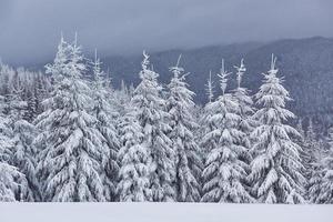Mañana de invierno tranquilo paisaje de montaña con hermosos abetos helados y pista de esquí a través de ventisqueros en ladera de la montaña foto