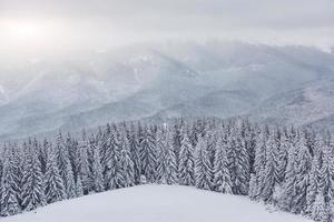 Scenic image of spruces tree. Frosty day, calm wintry scene. Location Carpathian, Ukraine Europe. Ski resort. Great picture of wild area. Explore the beauty of earth. Tourism concept. Happy New Year photo