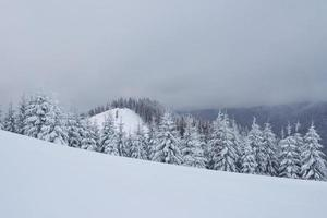 Morning winter calm mountain landscape with beautiful frosting fir trees and ski track thrue snowdrifts on mountain slope photo