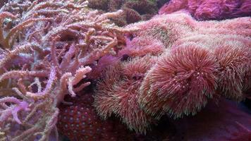 Underwater world with corals video