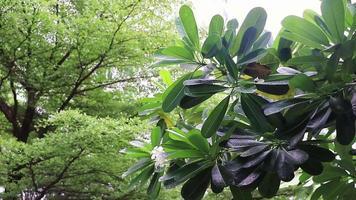 Rain over trees plants tropical garden in Bangkok Thailand. video