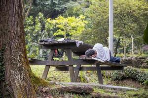 Malasia duerme en un banco del parque en el jardín botánico de Perdana, Kuala Lumpur, Malasia. foto