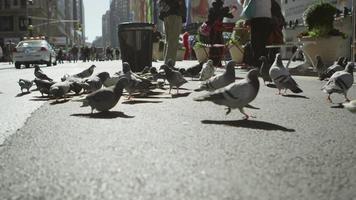 Pigeons take flight on a New York City street video