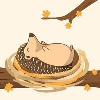 Hedgehog Cartoon Porcupine Illustrations vector