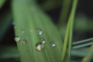 Bright green leaves with water drops and reflections photo