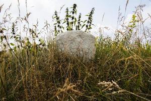 2021 07 23 revine lago piedra en la hierba foto