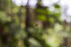 2021 07 31 Tignale Spider photo