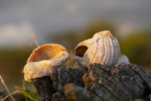 Still life with seashells on a blurry background photo