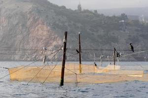 Redes de pesca amarillas sentadas sobre ellos cormoranes y gaviotas foto