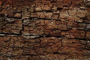 Textura de corteza de árbol marrón oscuro telón de fondo de trexture horizontal foto