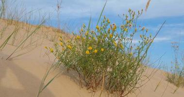 Oleshky sands in Ukraine. Mixed landscape with desert and steppe. video