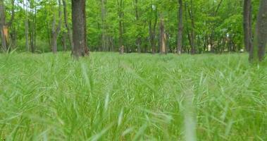 promenade pov dans le parc printanier avec des plantes vertes fraîches video