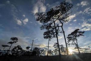luz del sol en los árboles en el bosque foto