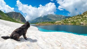perro pastor en la nieve cerca del lago de montaña foto