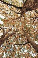 plantas de otoño con follaje colorido tomado desde abajo foto