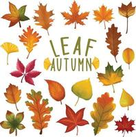 Set of watercolor painted Leaf, Autumn leaves clipart. Hand drawn isolated on white background vector