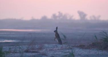 Bunny sitting near river after sunset video
