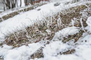 heladas y nieve en los arbustos del bosque seco foto
