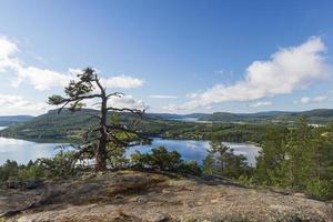 Pine tree on a cliff in in High Coast area i Vasternorrland Sweden photo
