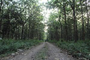 straight path in the forest photo