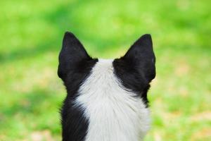 hermoso, primer plano, perro, de atrás, vista foto