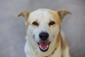 lindo perro en un día soleado foto