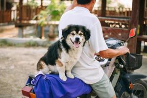 lindo perro sentado en la motocicleta. foto