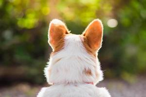 beautiful close-up dog from behind view photo