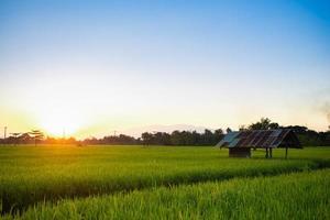 Campo de arroz de Tailandia con cielo azul y nubes blancas foto