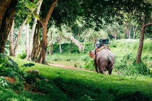 Asia elephant in the forest. It can see in Chiang mai ,Thailand. photo
