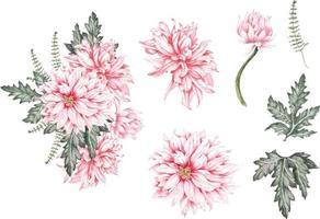crisantemo pintado en acuarela vector