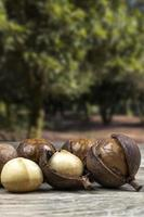 Group of macadamia nuts on a wooden table with an orchard in the background, Brazil photo
